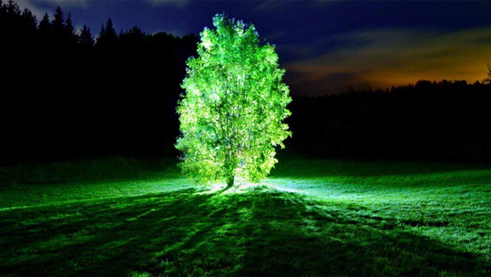 Árbol luminoso