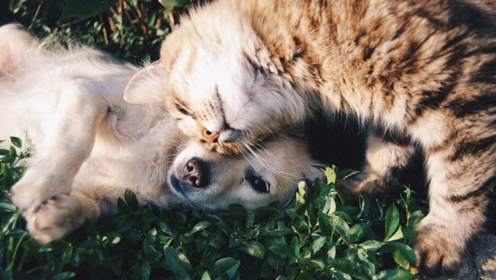 Gatito y perrito