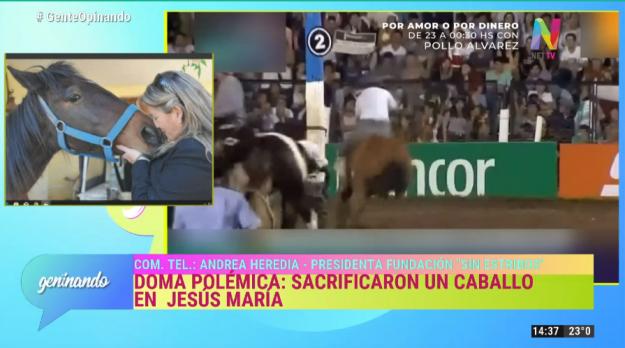 Sacrificaron un caballo en Jesús María