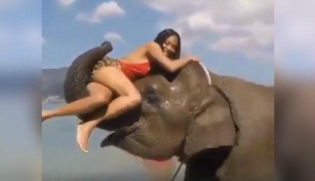 elefante foto viral