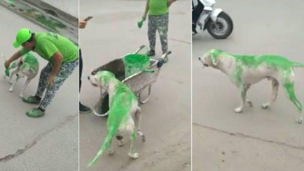perro pintado verde tucuman