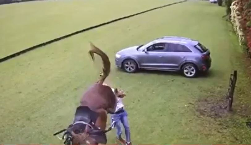 La estremecedora patada de un caballo a un joven en Tortuguitas - Canal Net Tv