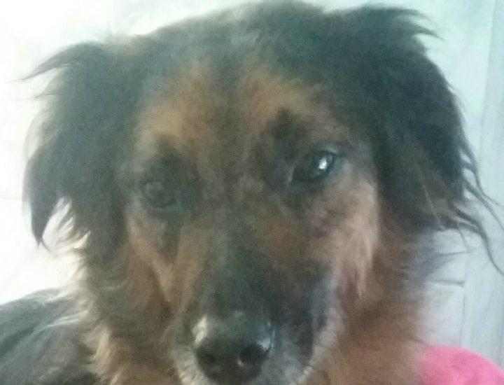 mona perra perdida ezeiza